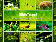 Wild_Nature_Animals_PowerPoint_Themes_And_PowerPoint_Slides_ppt_design