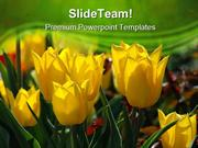 Yellow_Tulips_Beauty_PowerPoint_Templates_And_PowerPoint_Backgrounds_p