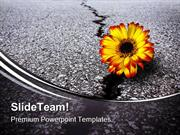 Flower In Asphalt Metaphor PowerPoint Templates And PowerPoint Backgro