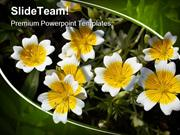 Flower Nature PowerPoint Templates And PowerPoint Backgrounds ppt them