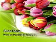 Fresh Tulip Flowers Beauty PowerPoint Templates And PowerPoint Backgro