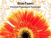 Gerber Daisy With Background Design PowerPoint Templates And PowerPoin