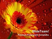 Gerber Daisy With Dew Drops Nature PowerPoint Templates And PowerPoint