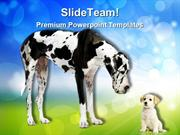 Great Dane Harlequin Animals PowerPoint Templates And PowerPoint Backg
