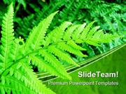 Green Fern Nature PowerPoint Templates And PowerPoint Backgrounds pgra