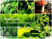 Green Summer Forest Collage Nature PowerPoint Templates And PowerPoint