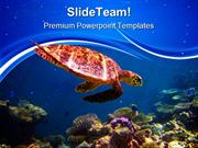 Hawksbill Turtle Swimming Animals PowerPoint Templates And PowerPoint