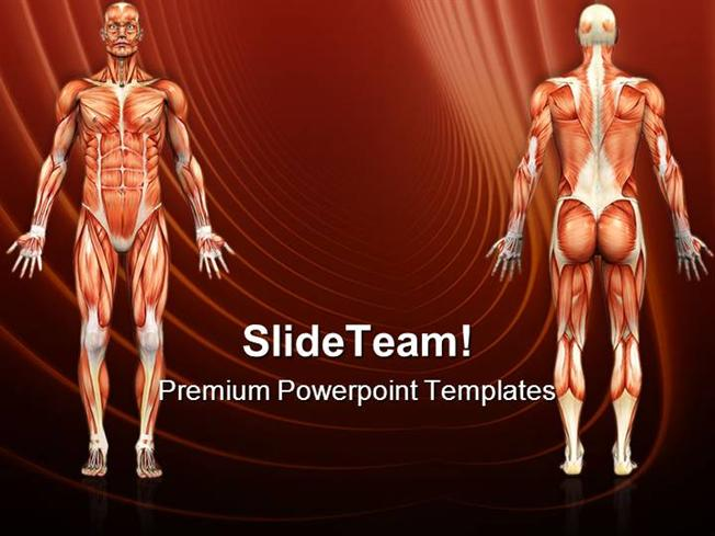 Human Anatomy Male Muscles Science Powerpoint Templates And