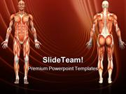 Human Anatomy Male Muscles Science PowerPoint Templates And PowerPoint