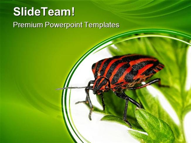 animal power point templates