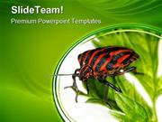 Insect Animals PowerPoint Templates And PowerPoint Backgrounds ppt des