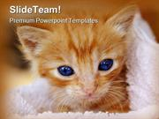 Kitten Animals PowerPoint Templates And PowerPoint Backgrounds 0211