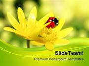 Ladybird Animals PowerPoint Templates And PowerPoint Backgrounds ppt d