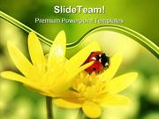 Ladybird On Yellow Petals Nature PowerPoint Templates And PowerPoint B