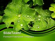 Leaves After The Rain Nature PowerPoint Themes And PowerPoint Slides p