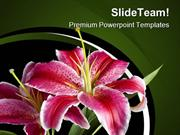 Lily Flowers Beauty PowerPoint Templates And PowerPoint Backgrounds pp