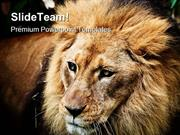 Lion Portrait Animals PowerPoint Templates And PowerPoint Backgrounds