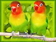Love Birds Parrots Animals PowerPoint Templates And PowerPoint Backgro