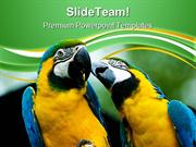 Love Parrots Animals PowerPoint Templates And PowerPoint Backgrounds p