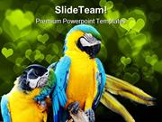 Loving Macaw Animals PowerPoint Templates And PowerPoint Backgrounds p