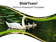 Mother Swan With Babies Family PowerPoint Templates And PowerPoint Bac