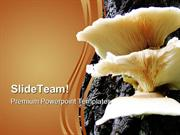 Mushrooms On Tree Food PowerPoint Templates And PowerPoint Backgrounds