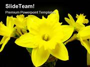 North West Daffodils Beauty PowerPoint Templates And PowerPoint Backgr