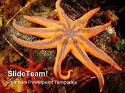 Northern Starfish Animals PowerPoint Themes And PowerPoint Slides ppt