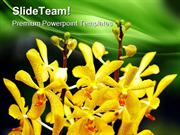 Orchids Flower Beauty PowerPoint Templates And PowerPoint Backgrounds