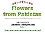 Flowers from Pakistan