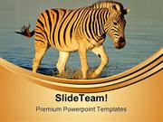 Plains Zebras Animals PowerPoint Themes And PowerPoint Slides ppt layo