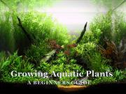 Growing Aquatic Plants