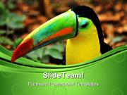 Rainbow Toucan Animals PowerPoint Templates And PowerPoint Backgrounds
