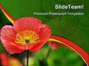 Red Iceland Poppy Beauty PowerPoint Templates And PowerPoint Backgroun