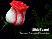 Red Rose Beauty PowerPoint Themes And PowerPoint Slides ppt layouts