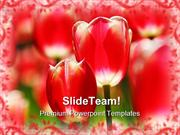 Red Tulips Beauty  PowerPoint Templates And PowerPoint Backgrounds 021
