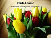 Red Yellow Tulips Beauty PowerPoint Templates And PowerPoint Backgroun
