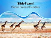 Running Giraffes Animals PowerPoint Themes And PowerPoint Slides ppt l