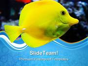 Seawater Butterflyfish Animals PowerPoint Themes And PowerPoint Slides