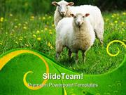 Sheep In Field Animals PowerPoint Templates And PowerPoint Backgrounds