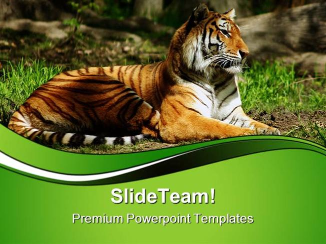Siberian Tiger Animals Powerpoint Themes And Powerpoint