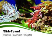Shrimps Nature PowerPoint Templates And PowerPoint Backgrounds pgraphi