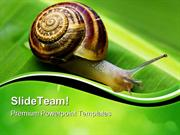 Snail On Leaf Animals PowerPoint Templates And PowerPoint Backgrounds