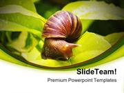 Snail Animals PowerPoint Templates And PowerPoint Backgrounds ppt layo