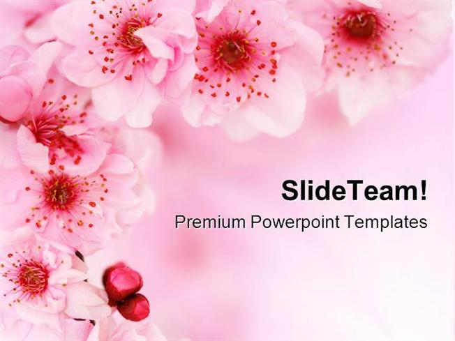 Spring Cherry Flowers Background Beauty Powerpoint Templates And P