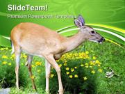 Spring Deer Animals PowerPoint Templates And PowerPoint Backgrounds pp