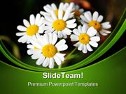 Summer Daisies Nature PowerPoint Templates And PowerPoint Backgrounds