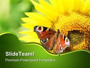SunFlower With Butterfly Nature PowerPoint Templates And PowerPoint Ba