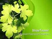 Sunlit Leaves Nature PowerPoint Templates And PowerPoint Backgrounds p