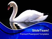 Swan Reflected Animals PowerPoint Templates And PowerPoint Backgrounds